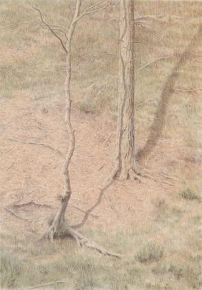 Shadow of tree,