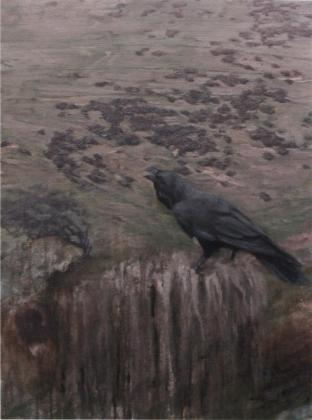 a raven on the back of a sheep