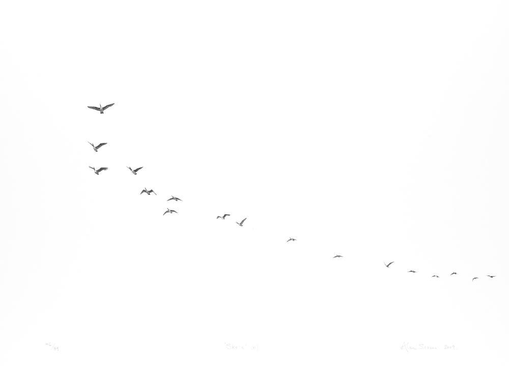 Geese, flying,