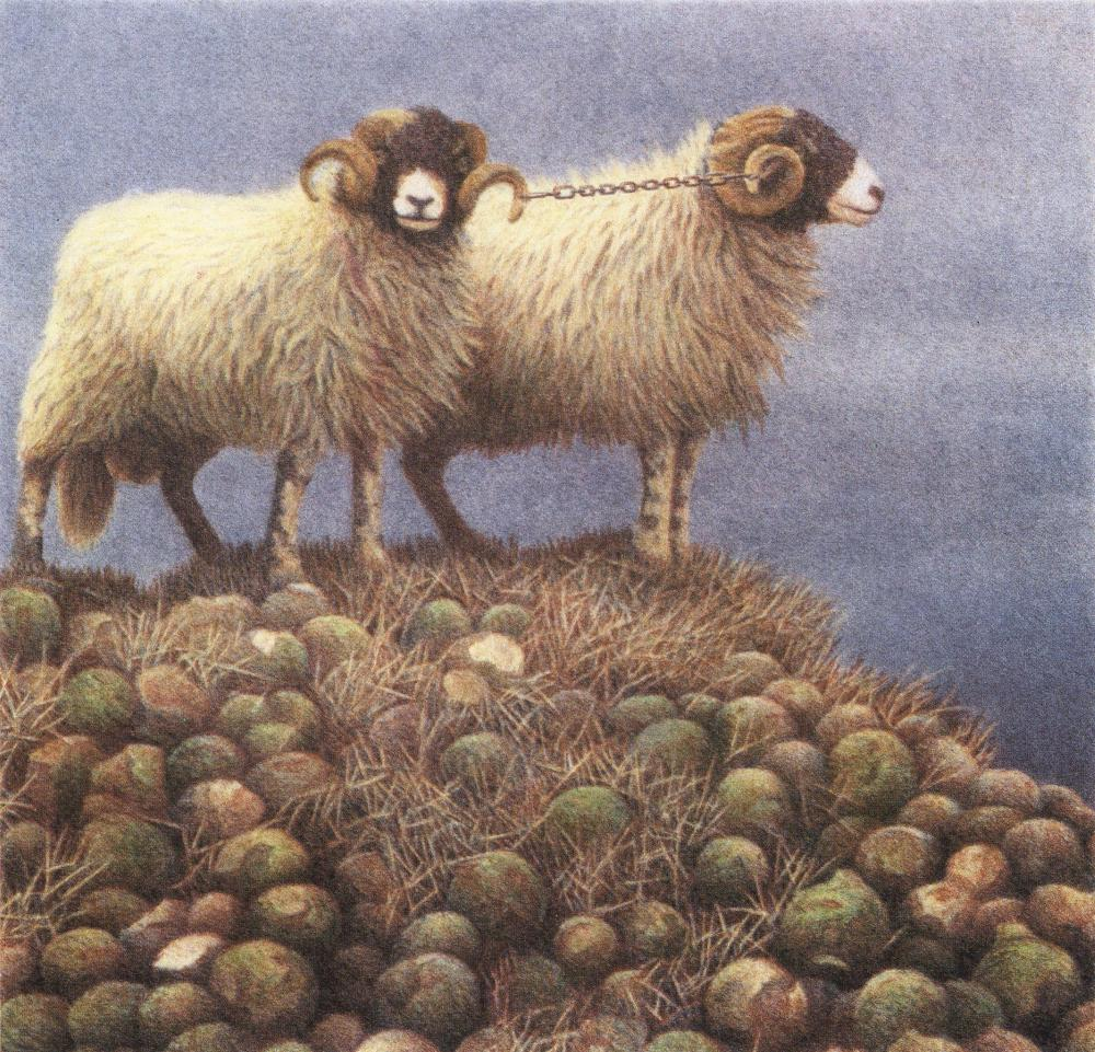 Yoked sheep,